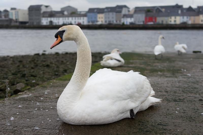 0614_Galway-58.jpg