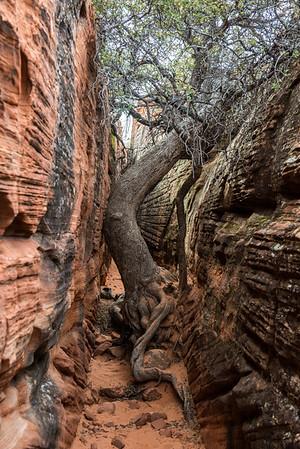 Snow Canyon - Gila Trail