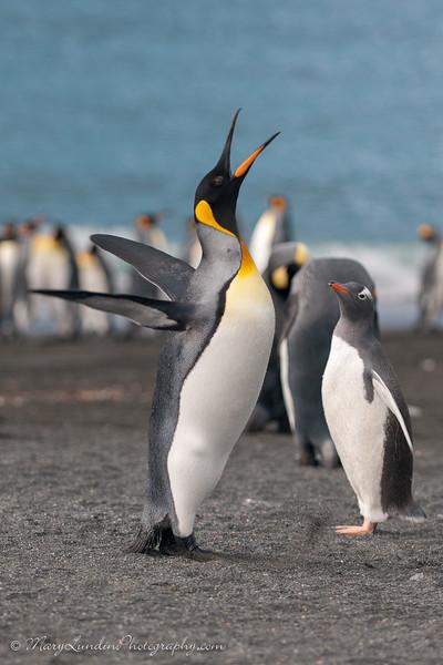 Antarctic-87