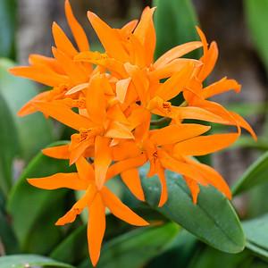 Madagascar Orchid Show - Missouri Botanical Gardens 2/13