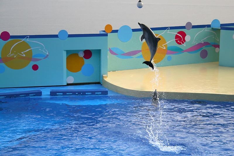 Ocean Park, Dolphin