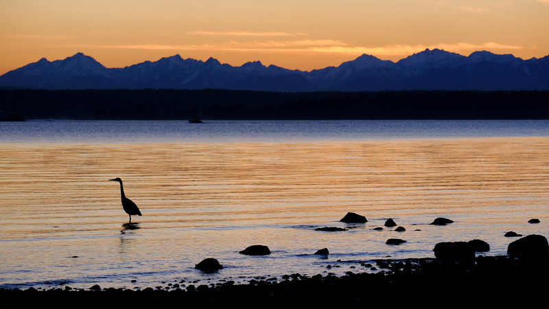 heron-sunset-wide.jpg