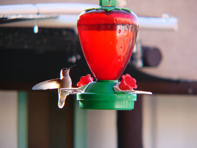 Ghost Ranch Hummingbirds 2010 Aug.
