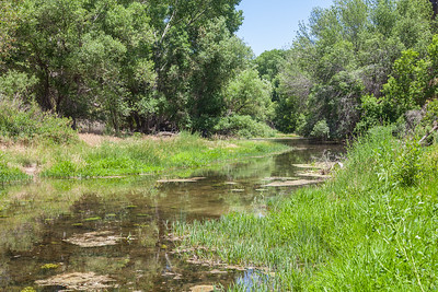Verde River Headwaters, June 16, 2015