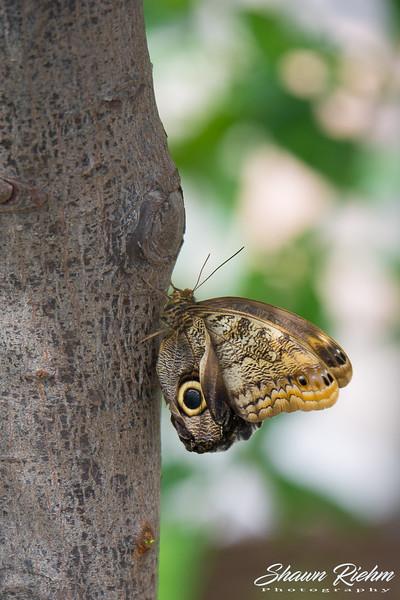 Butterfly-238.jpg