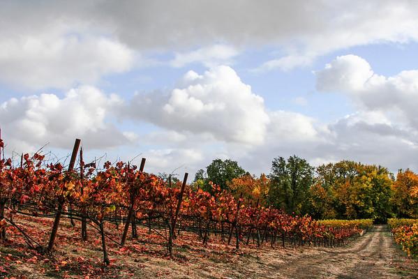 Wine Crountry
