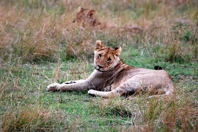 Kenya 2010 Masai Mara