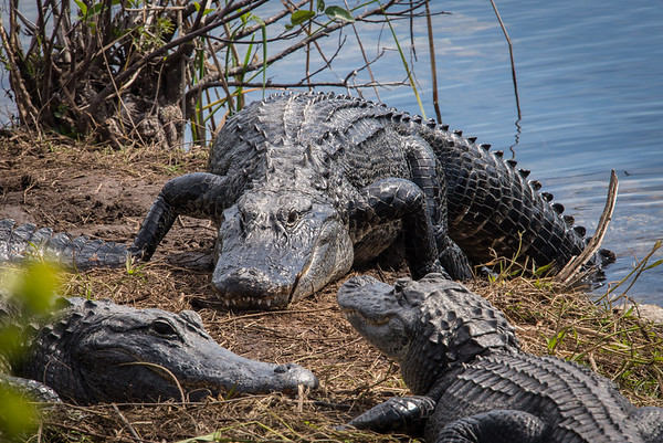 Southwest Florida 2018 (January)