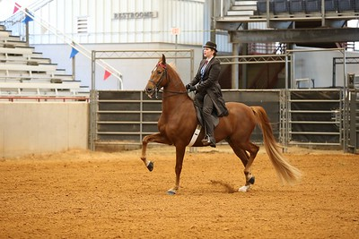5 .3 Gaited English Country Pleasure Amateur