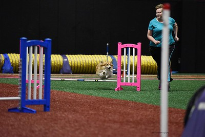 Peoria Obedience Training Club AKC Agility - October 7-8, 2017