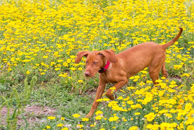 Dogs_Bosca_Cornwall_2014_FH0T7779.jpg