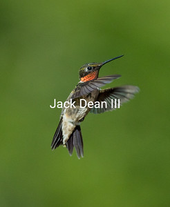 Taken near a feeder.