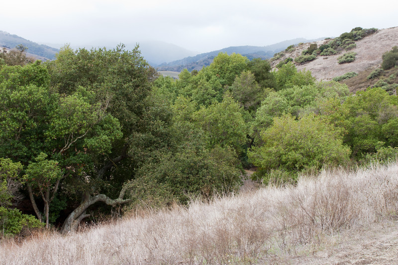 I love the layers of grass, trees, hills,and distant mountains.