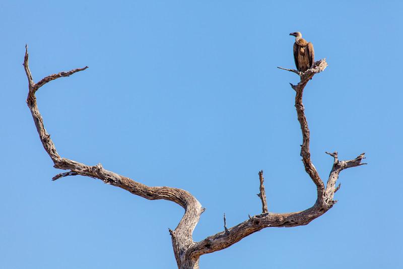 Botswana-14.jpg