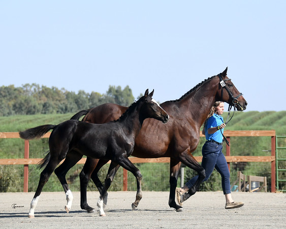 Jumpin Janet w/Donarweiss filly