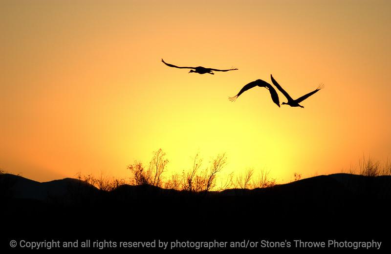 015-birds-bosque_del_apache_nm-01dec06-9868.jpg