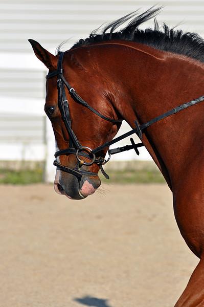 Horses July 2011 139a.jpg