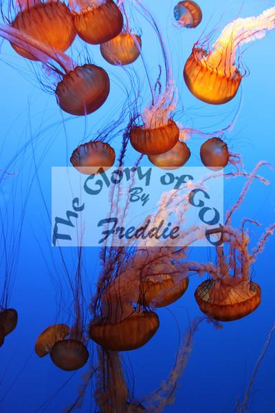 Aquarium 20067.jpg