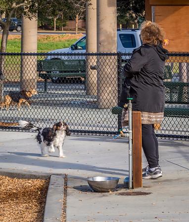 Pleasanton Dog Park