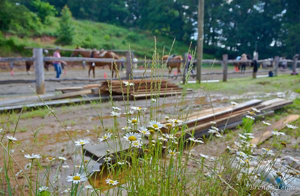 June Horsemanship Clinic @Blackberry Stables at Newfound w/Emily Shields
