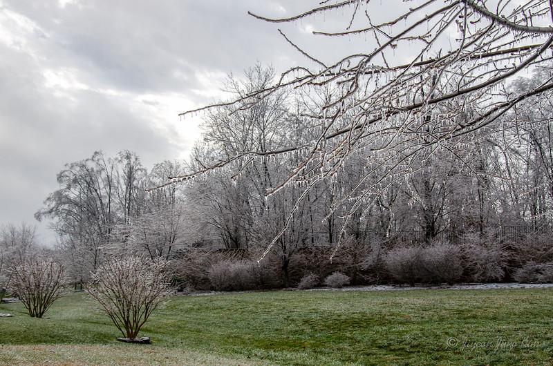 Winter-7144.jpg