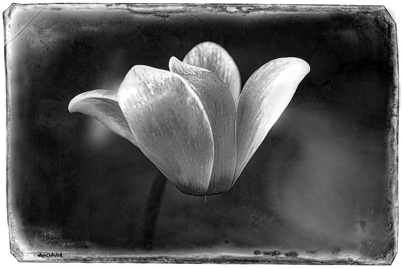 flower_4488-Edit3combw.jpg