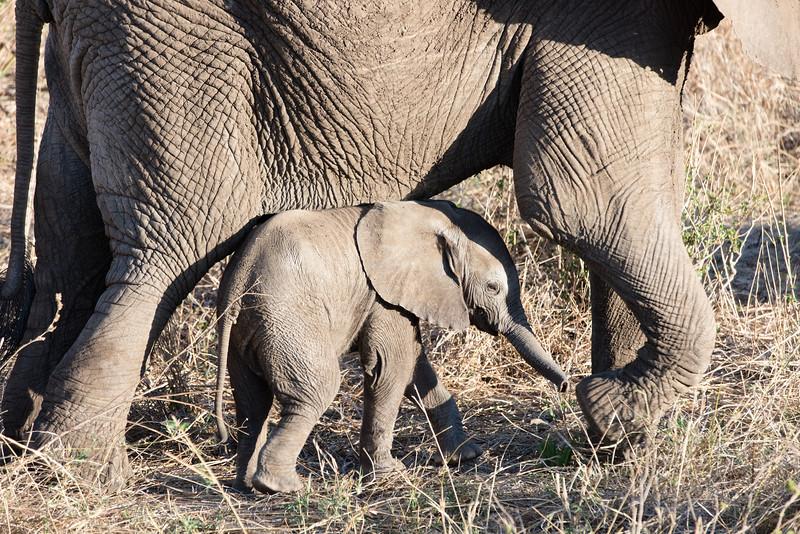 Africa - 102016 - 8015.jpg