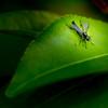 Jamaica_Bay_Wild_Life_Refuge-0872