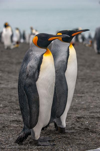 Antarctic-141