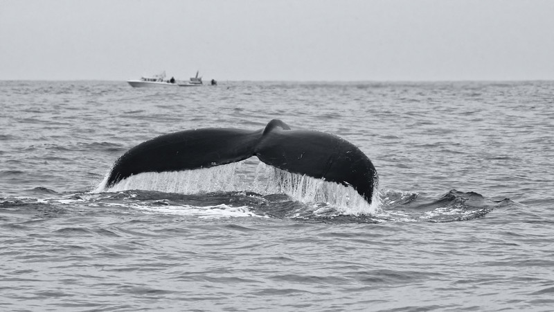 2014 Whale Watching Cruise