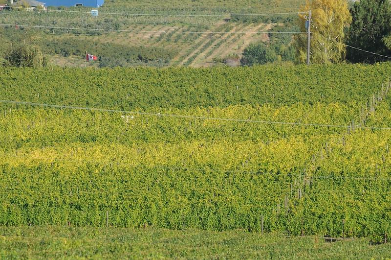 DSC_0469 - 2008-10-11 at 14-54-16 - 2008-10-11 at 14-54-16.jpg