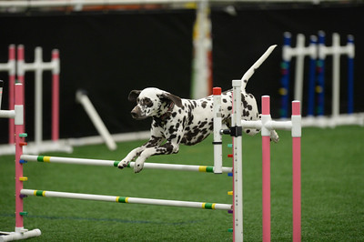 Mid NJ PBGV Assoc. AKC Agility Trial October 24-25