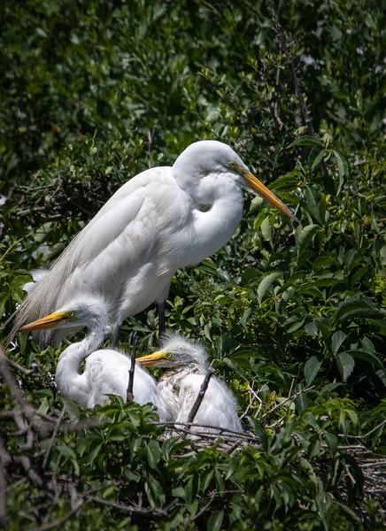Pinckney Island National Wildlife Refuge - May, 2019