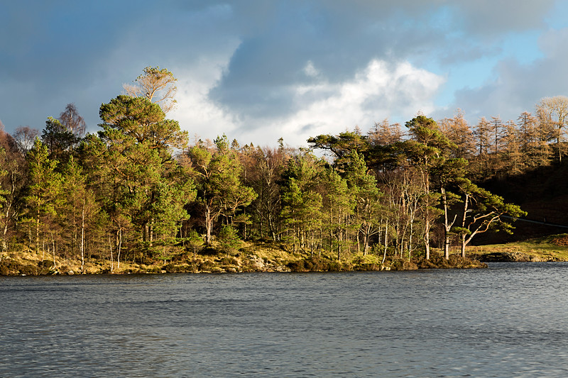 Tarn Hows In The English Lake District