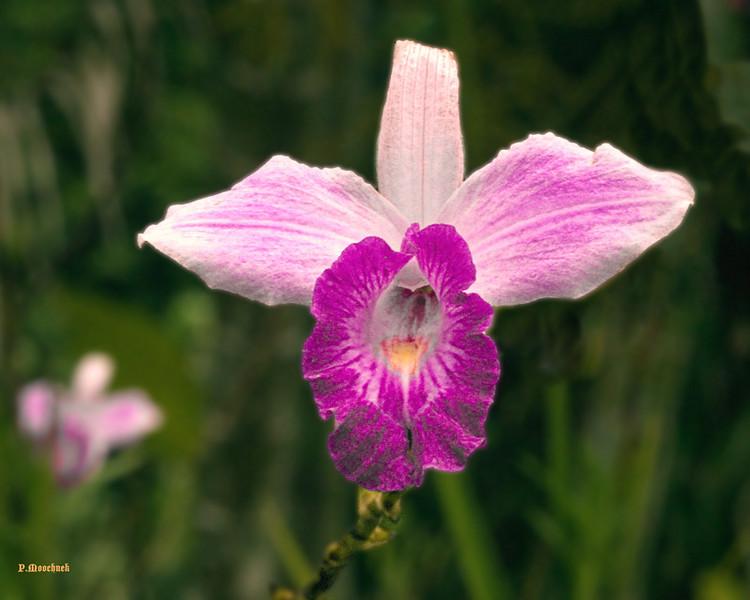orchid1206.jpg
