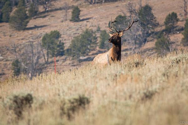 Idaho Elk Hunt 2017