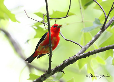 Birds at Cane Creek Canyon Preverve in north Alabama
