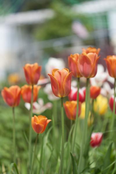 flowers-0453.jpg