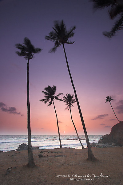vagator_coconut.jpg