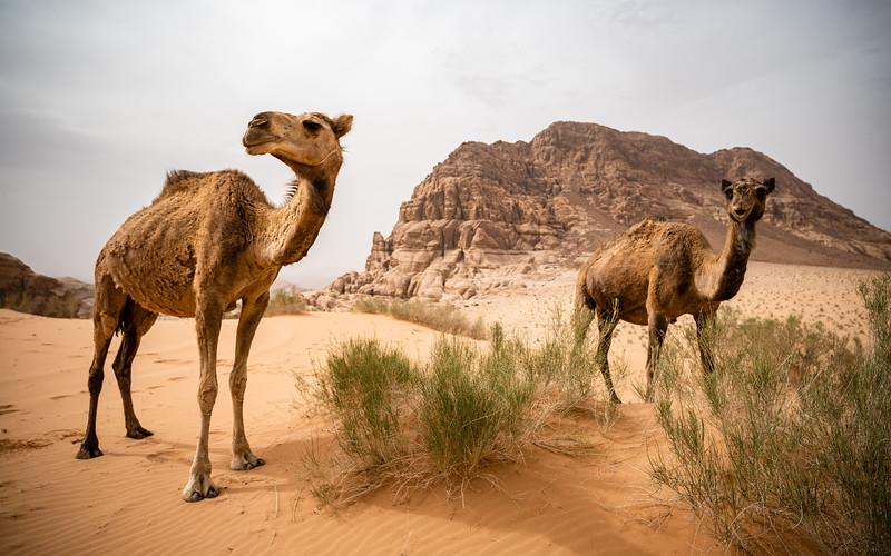 2018_Jordan_Wadi Rum 2_genevievehathaway-12.JPG