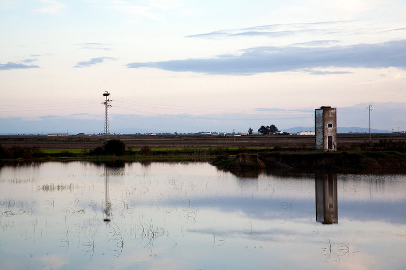Flooded field in Doñana marshland area, town of Isla Mayor, province of Seville, autonomous community of Andalusia, southwestern Spain