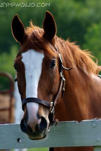 BRB-Horses