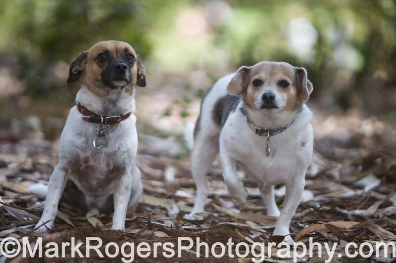 Diego & Peanut