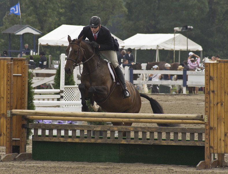 horseshow8-bobg_22_20141019_1089362320.jpg