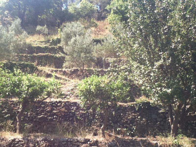 20110820-Ginka-Sicily-20110820--IMG_1585--0783.jpg