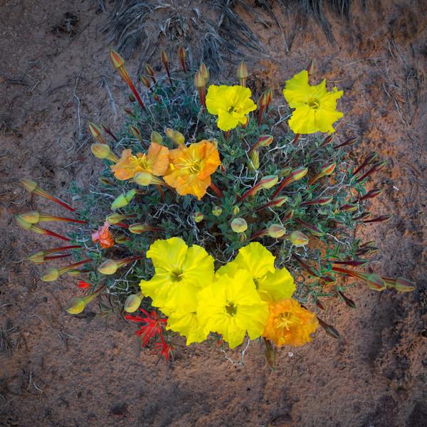 desert bouquet 28x28 shrp.jpg