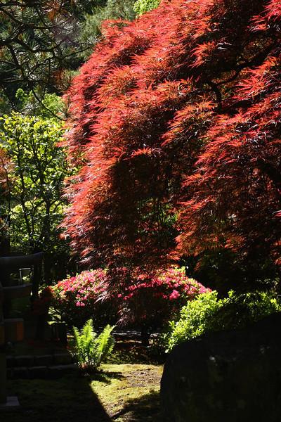 Portland Japanese Garden 6-3-11  1785.jpg