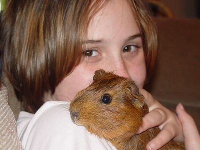 2003-12-Nutmeg the Guinea Pig