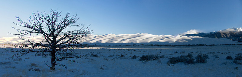 Panoramic image of solitary dead pine and snow covered sand dunes.