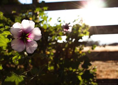 Sonoma Blog Post